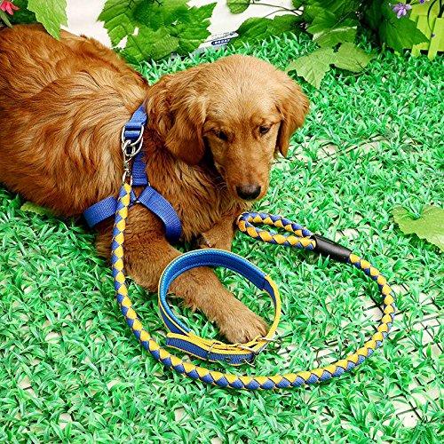 1,5 M Dreiteiliges gewebte Nylon Leine Hund Spot Großhandel Seil Seil Taidijinmao, Gelb Blau 3 Stück, L-2,5Cm/1,5 Meter langes Band Breite (Gewebt Spot)