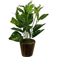 Fancy Mart Artificial Money Plant in Wood Round Small Pot (20 cm x 20 cm x 30 cm, Green)