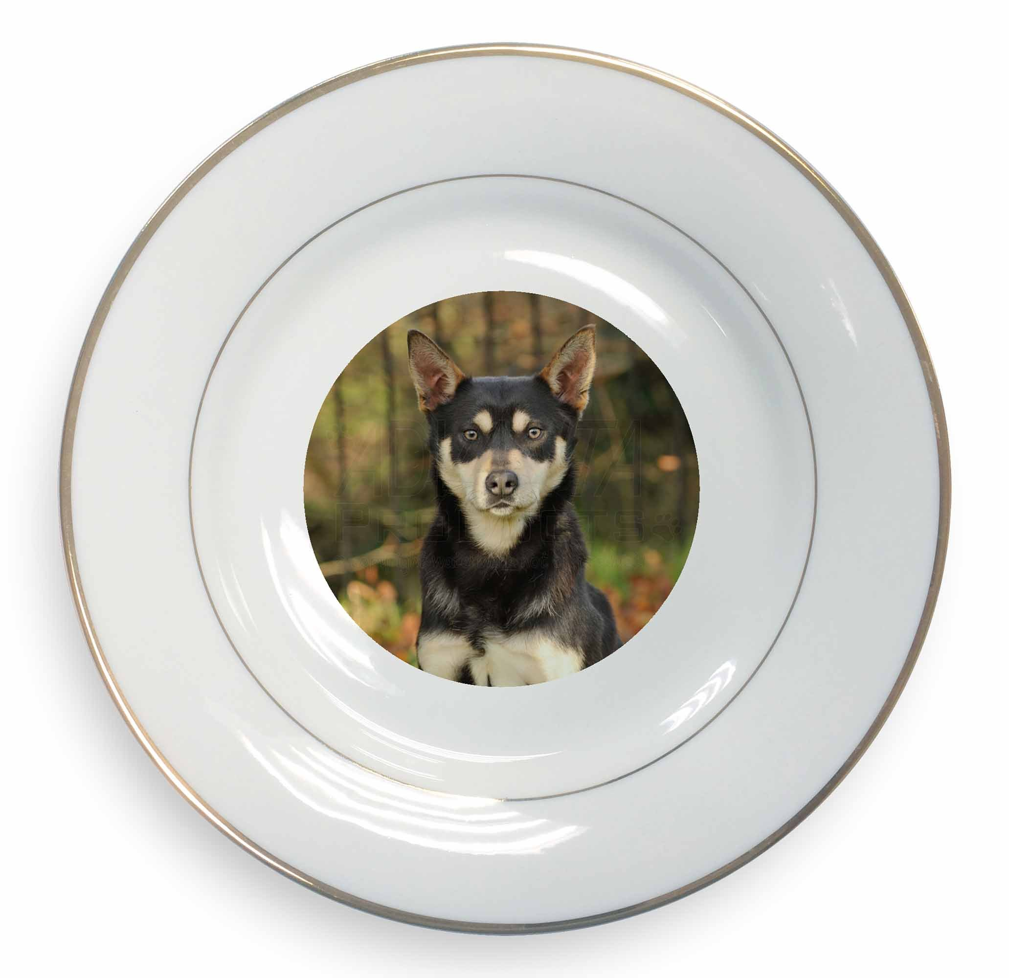 Advanta Group Australian Kelpie Dog Gold Rim Plate in Gift Box