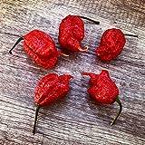 20 Samen ''CAROLINA REAPER'' Chili -WELT REKORD CHILLI- mit Spitzenwerten von über 2.000.000 Scoville