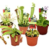 Exotenherz - Set de inicio de plantas carnívoras - 5 plantas