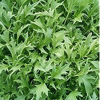 ScoutSeed 200 Graines Bio de Mizuna Salade Japonaise Roquette pour mesclun