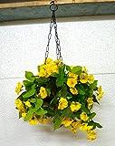 VATIKA FLOWER Beautiful Bright Yellow Morning Glory Flowers Hanging Wooden Pot Hoock Chain