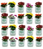 VITARA™ [ 20 Bags ] UV Treated Poly Grow Bags for Terrace Garden Vegetable , Plants and More(White Outside, Black Inside…