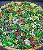 BALDUR-GartenSteingarten-Stauden-Mix 10 Pflanzen winterhart