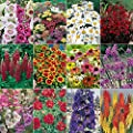 Complete Cottage Garden Perennial Plug Plant Collection (24 Pieces)