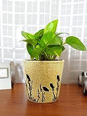 Rolling Nature Good Luck Money Plant in Brown Bucket Aroez Ceramic Pot