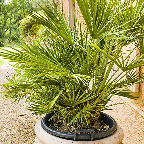 Palm Mélange de graines