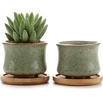 Rachel S 6 5cm Collection Printemps Serie No 3 Plante En Pot Pots De
