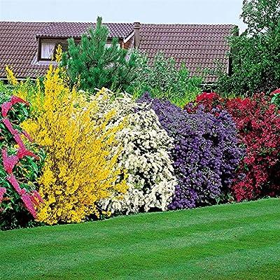 Blühende Hecke von Meingartenshop auf Du und dein Garten