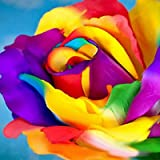TOYHEART 200 Piezas De Semillas De Flores Premium, Semillas De Rosas Arcoíris, Cultivos Decorativos De Crecimiento Rápido, Se