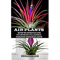 AIR PLANT: Step by Step Guide to Growing Tillandsia + Tips for Indoor Plants