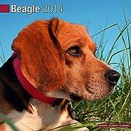 Beagle 2014 (Calendar 2014)