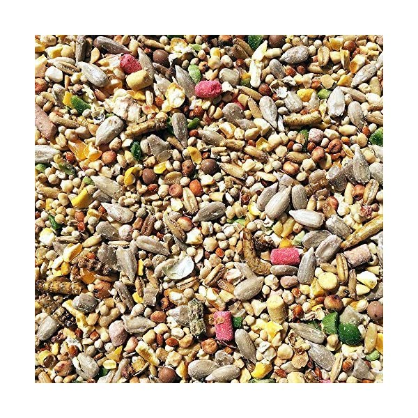 20kg Robin and Wild Bird Food Mix with Sunflower Hearts Suet Pellets & Mealworms