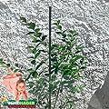 Windhager Stahl-Pflanzstab 180 cm, Grün von Jung - Garten & Freizeit Vertriebsges. bei Du und dein Garten