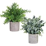 """Winlyn 2 Pack Artificial Potted Plants Faux Eucalyptus & Rosemary Greenery in Pots Small Houseplants 8.3""""-9"""" Tall for..."""