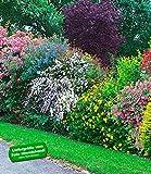 BALDUR-Garten S Sommer-Hecken-Kollektion