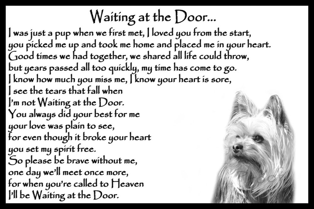 Yorkshire Terrier pet loss memorial bereavement gift – Waiting at the Door