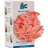 Blue Farmers   Kit à Champignons   Pleurotes Roses   CERTIFIE BIO et MADE IN FRANCE   Idée cadeau