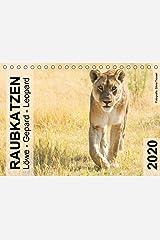 Raubkatzen - Löwe, Gepard, Leopard (Tischkalender 2020 DIN A5 quer): Wild und frei im südlichen Afrika. (Monatskalender, 14 Seiten ) (CALVENDO Tiere) Kalender