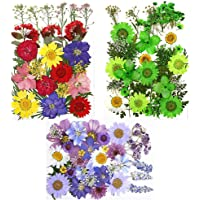 Paquet de 3 Fleurs séchées Naturelles, Fleurs pressées en résine pour la Fabrication de Cartes de Signet Bricolage (Vert…
