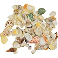 AVMART 350 GM Multi Colored Beautiful Natural Sea Shells for Aquariums/Art & Crafts/Home Decor/Table Decoration