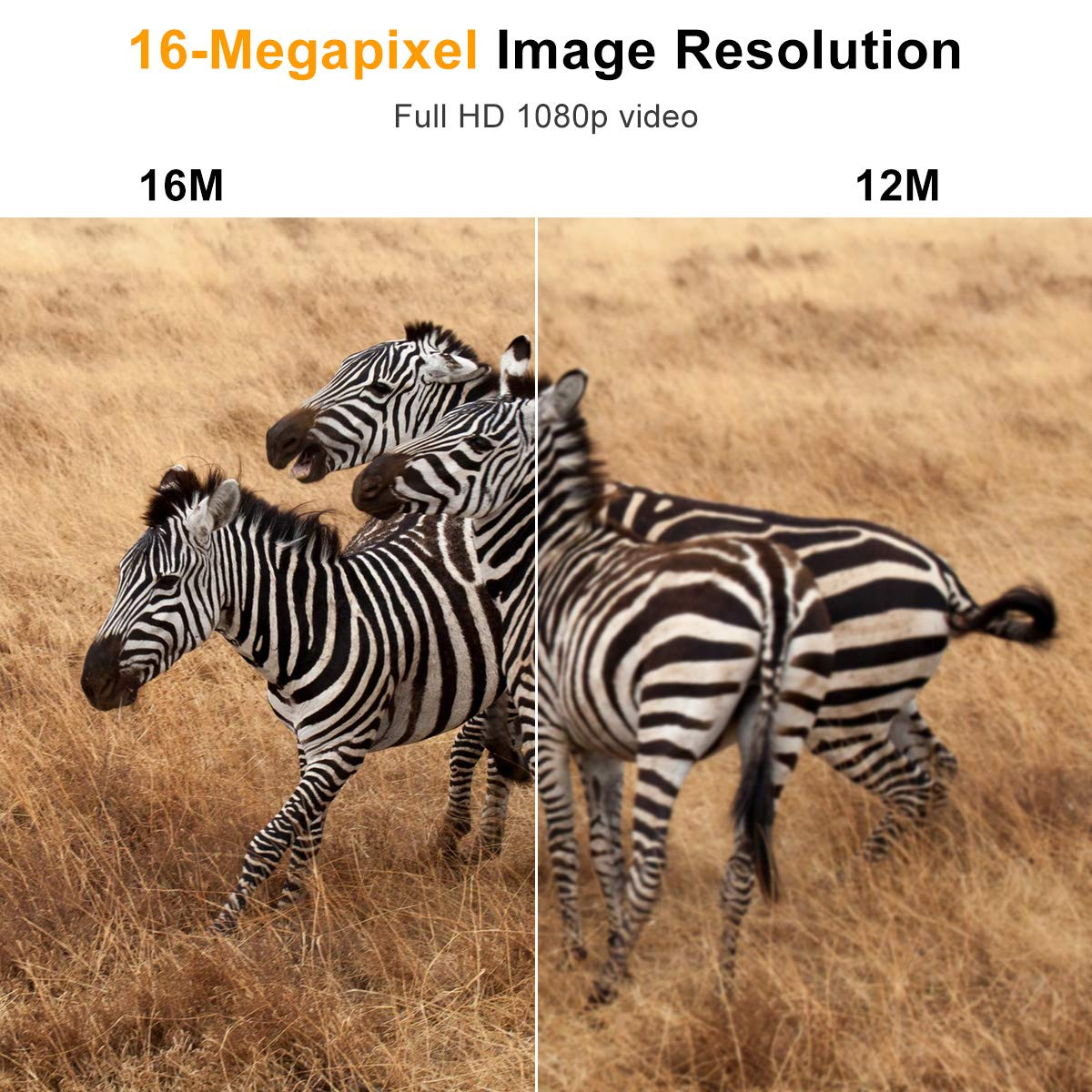 74e235a8ab227 Trail Camera 16MP 1080P Tvird Wildlife Camera No Glow Night Vision Motion  Activated 2S Trigger Speed 42PCS IR LED for Wildlife Monitoring