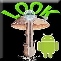Mushroomslook