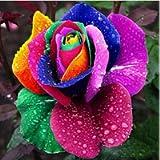 Oce180anYLVUK Semi di rosa arcobaleno, 100 pezzi/borsa Semi di rosa arcobaleno Non-OGM Aromatico Annuale Piantine di…