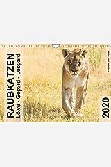 Raubkatzen - Löwe, Gepard, Leopard (Wandkalender 2020 DIN A4 quer) Kalender