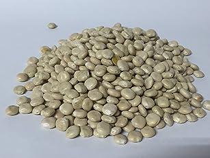Bio Süßlupinensamen ganze Körner keimfähig naturbelassen roh Bäckerei Spiegelhauer (weiße Süßlupine)
