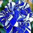TOYHEART 100 Piezas De Semillas De Flores De Primera Calidad, Semillas De Rosas, Raras Y Prolíficas, Bonsais Azules, Plantas