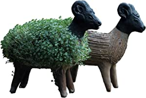 Grow Your Own Sheep Cress Figure (Including Cress Seeds) - Fair Trade from Mexico