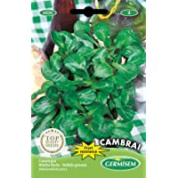 Germisem graines Mâche Verte Cambrai EC6030 Multicolore