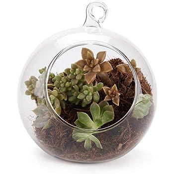 Piante Grasse In Vetro.Comsaf Vaso Vetro Appendere Di Pianta Trasparente 10cm Bicchiere
