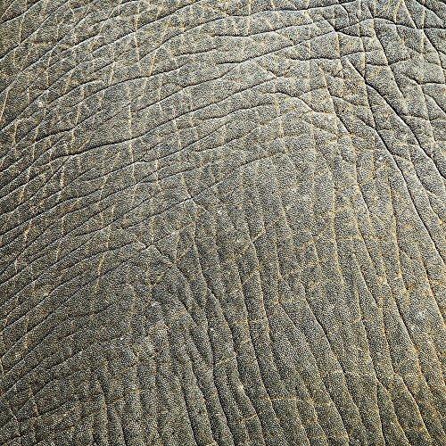 Apple iPhone 4 Housse Étui Silicone Coque Protection Look peau d'éléphant Motif peau d'animal Structure Étui en cuir gris