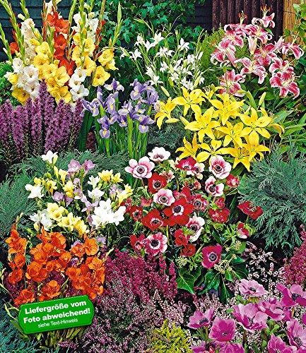 BALDUR-Garten Sommerblüher Spar-Paket 100 Zwiebeln im Mix 14x Freesien-Mix, 10x Prachtscharte, 10x Gladiolen-Mix, 40x Anemone