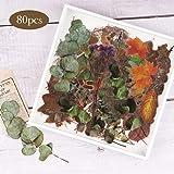 NogaMoga 80 Pièces Scrapbooking Stickers, Autocollants de Plantes Séchées de Grande Taille, Eucalyptus Gypsophila Transparent