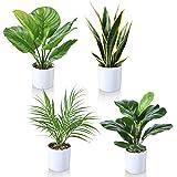 Kazeila 40cm Plantes artificielles Disponible en décoration Moderne en Lot de 4 pour la Maison ou Le Bureau