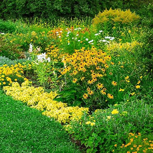 Jaune plantes Mélange de graines