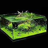 Lot de 600 graines d'herbe pour aquarium, décoration de paysage aquatique – Graines de fleurs, de légumes, de fruits, de jard