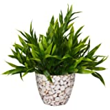 Fancy Mart Fabric, Wood & Plastic Artificial Bamboo Plant in Round Texture Pot (25 cm, White)