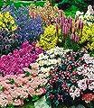 BALDUR-Garten Staudenbeet, Stauden-Sortiment, Staudengarten 'Gartenfreude', 15 Pflanzen Taglilie, Rittersporn, Bartfaden, Weiße und Rosa Witwenblume, Edeldistel, 2 x Frauenmantel, Prachtscharte, Rote und Rosa Flammenblume, Sommermargerite, Schlangenkopf,