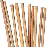 Nature by Kolibri Bamboestokken, plantenstokken voor het stabiliseren van planten in de tuin, rankstaven bamboe, 120 cm, natu