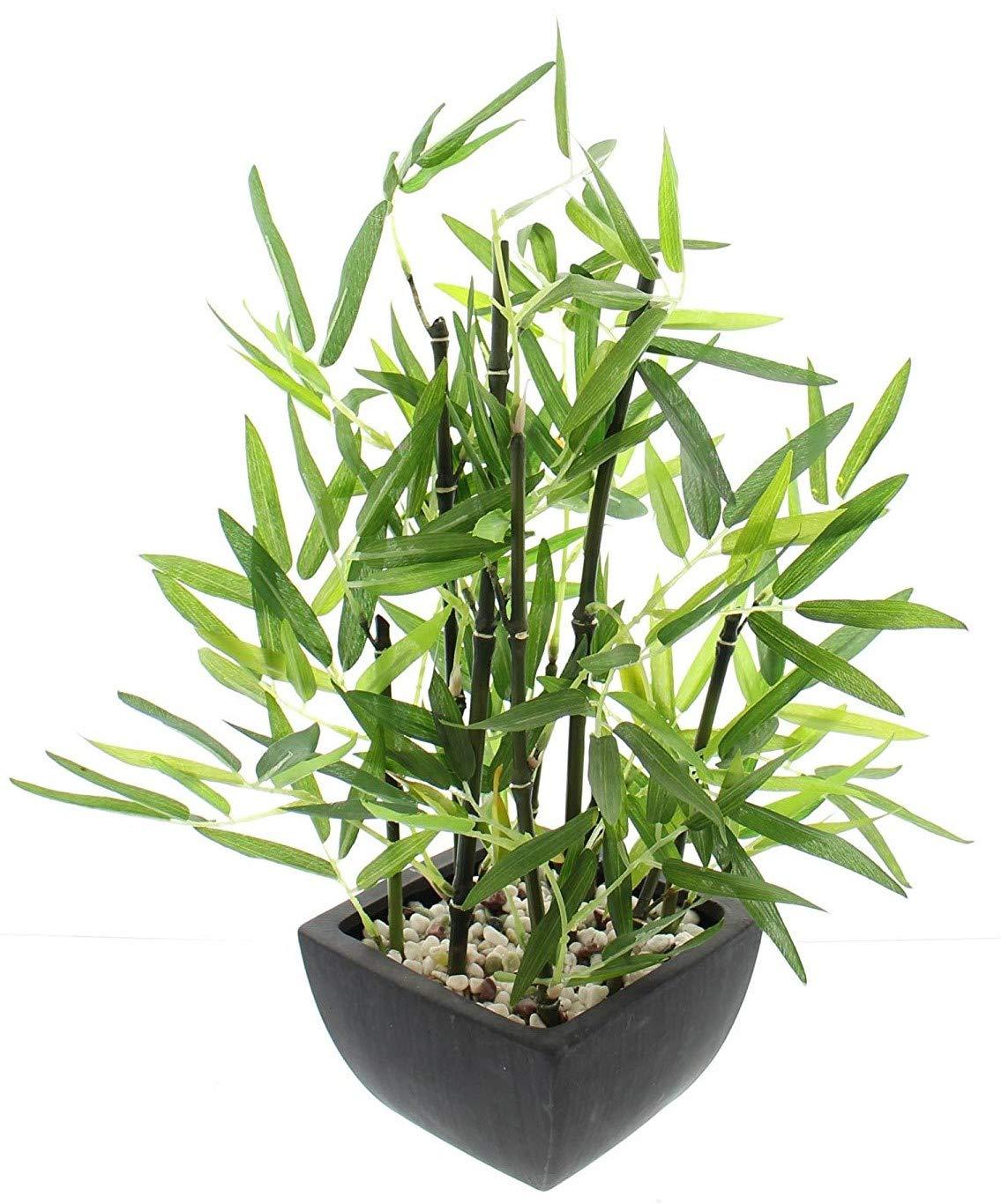 khevga – Planta de bambú decorativa en maceta