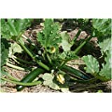 Premier Seeds Direct ORG038 - Semillas para Verduras (calabacín)