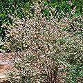 Garten-Heidelbeere Reka, 3 Sträucher von Amazon.de Pflanzenservice auf Du und dein Garten