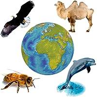 Tierweltgeräusche