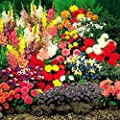 Sommer Zwiebelgarten - 100 blumenzwiebeln von Meingartenshop - Du und dein Garten