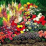 Bulbes de Jardin Période dété - 100 bulbes de fleurs